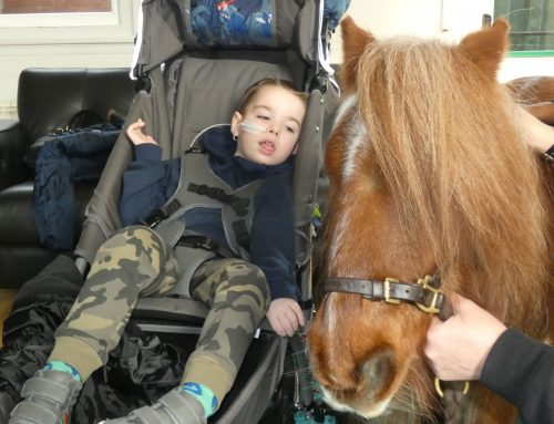 Therapeutic Pony Proves Popular